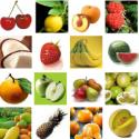 Comprar Aromas concentrados para alimentación Profesional