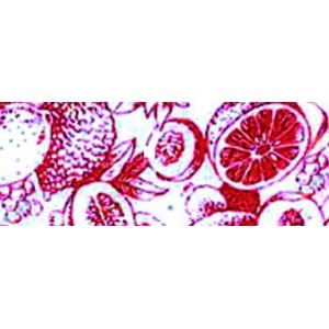 "Papel Pre-Impresión ""Frutos Exóticos Rojos"""