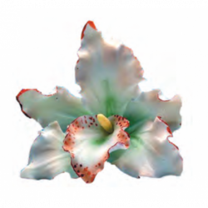 Orquidea Blanca Decoración